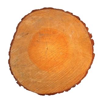 Section en bois avec anneaux de croissance isolés