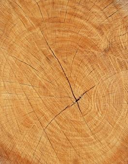 Section de bois