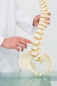 Section médiane d'un médecin de sexe masculin avec modèle de squelette