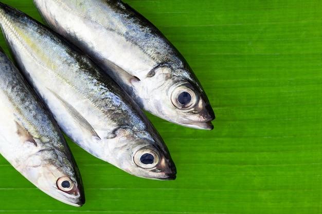 Selar crumenophthalmus, poisson à gros yeux sur feuilles de bananier
