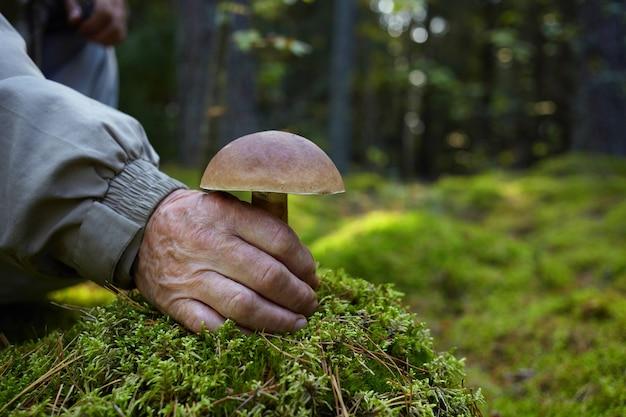 Sélecteur de mashroom avec machroom boletus. vieil homme coupe la main du mashroom blanc dans la forêt.