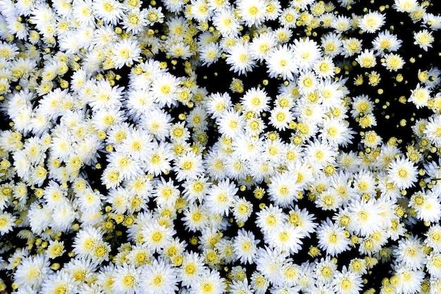 Sélection de nombreuses fleurs colorées en arrière-plan