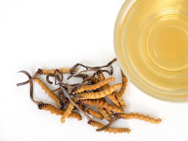 Sélectionnez le foyer de champignons cordyceps cela une herbes.