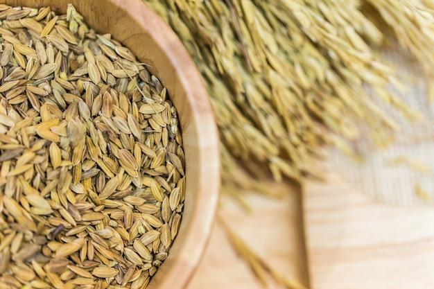 Semences de riz, semences de riz cru paddy sur fond de table en bois.