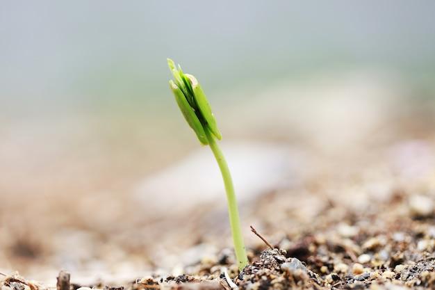 Semer un arbre qui pousse à l'arbre par le sol et l'eau bonne nature dans le monde