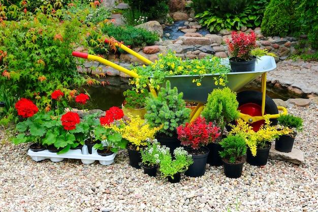 Les semis de fleurs et d'arbres en pots au bord de l'étang