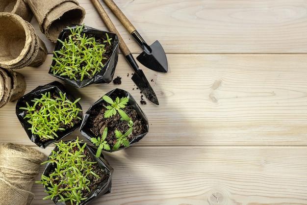 Les semis de fleurs dans des pots en plastique noir