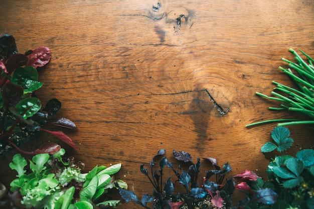 Semis sur fond de bois avec espace de copie laitue oignon betterave bette à carde semis de fraise