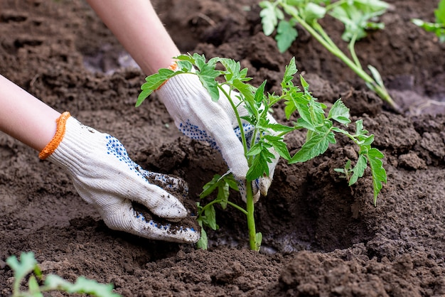 Semis germés dans le sol