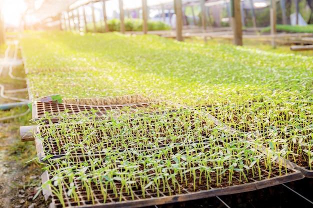 Semis de légumes biologiques.