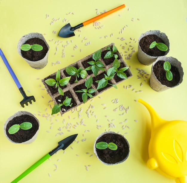 Semis de papier et de concombre