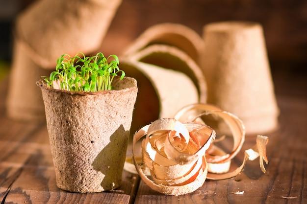 Semis en pot poussant dans de la tourbe biodégradable