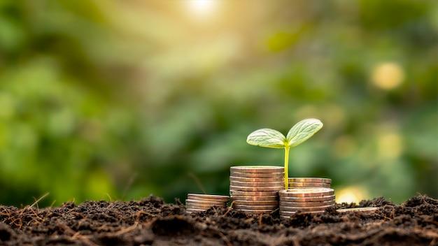 Un semis poussant sur un tas de pièces de monnaie a une toile de fond naturelle, un vert flou, des idées d'économie d'argent et une croissance économique.