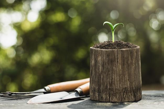 Les semis poussent dans des pots de bambou.