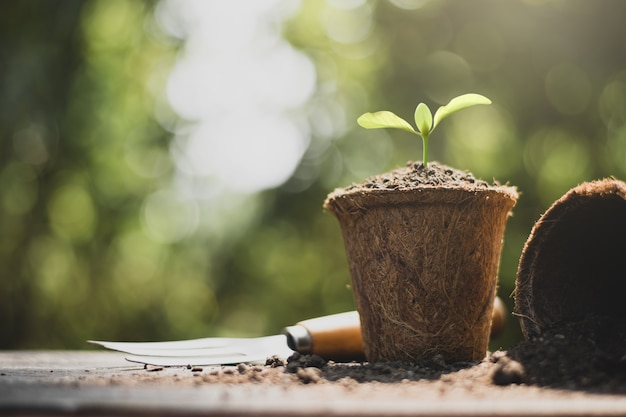 Les semis poussent dans des pots en fibre de coco.