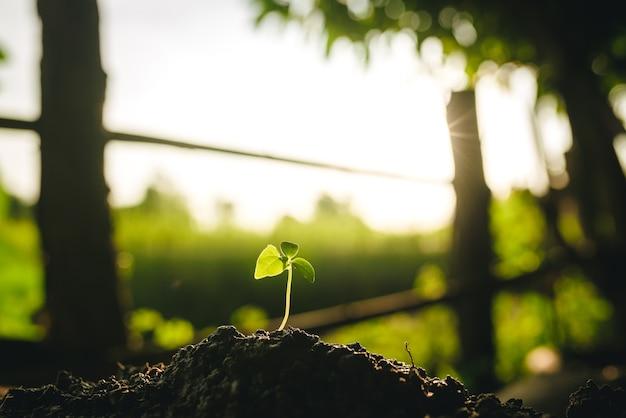 Les semis poussent dans le sol avec la lumière du soleil. planter des arbres pour réduire le réchauffement climatique.