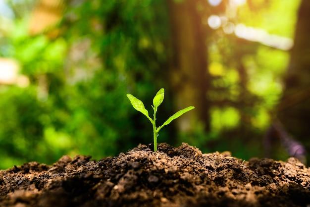 Les semis poussent dans le sol et la lumière du soleil.