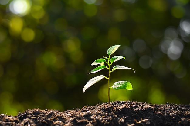 Les semis poussent dans le sol.