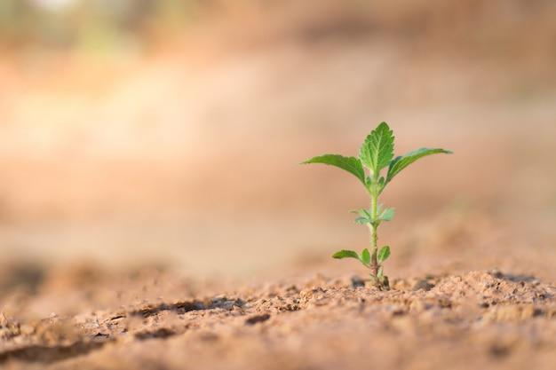 Les semis poussent dans le sol