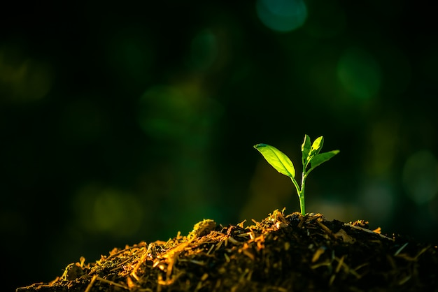 Les semis se développent dans le sol avec la lumière du soleil.