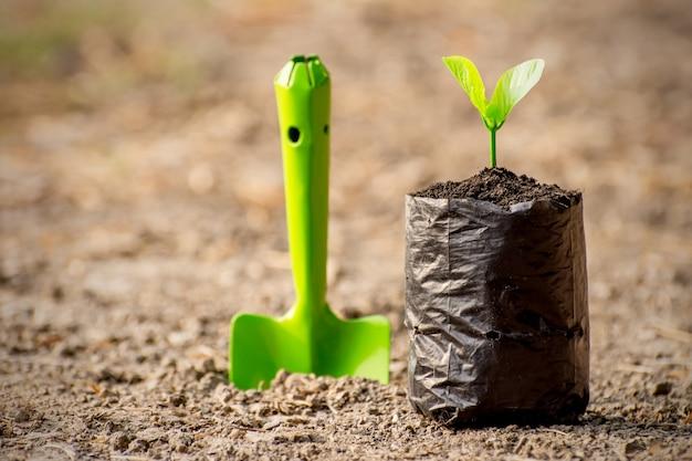 Les semis sont cultivés dans le sac de pépinière sur le sol stérile