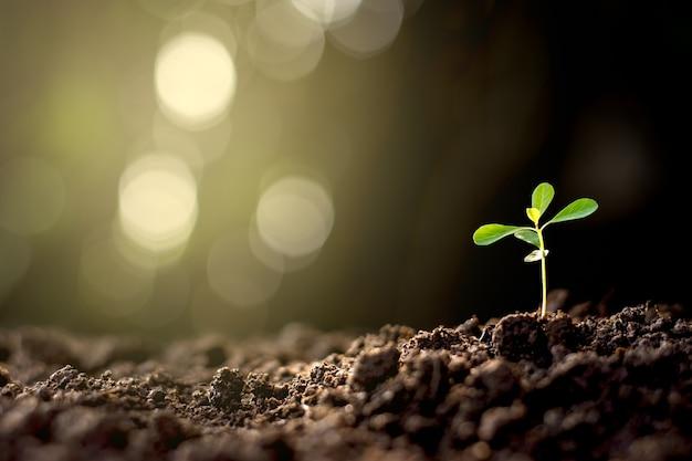 Les semis sont cultivés à partir de la base avec le fond de bokeh