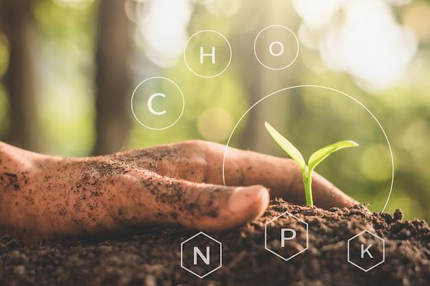 Les semis sont exubérants de sols limoneux abondants.