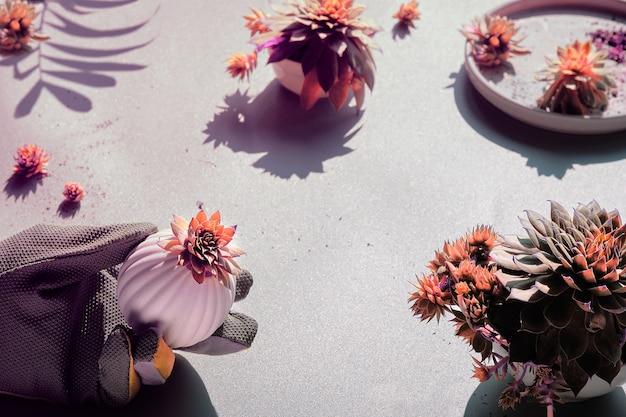 Sempervivum plante succulente en main gantée sur table texturée grise, forte lumière avec des ombres, image tonique