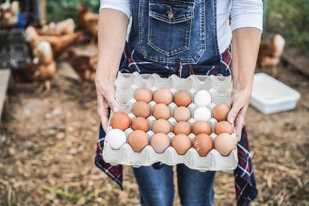 Senior farmer woman ramasser des œufs biologiques dans le poulailler - mode de vie à la ferme et concept d'alimentation saine - focus sur les mains