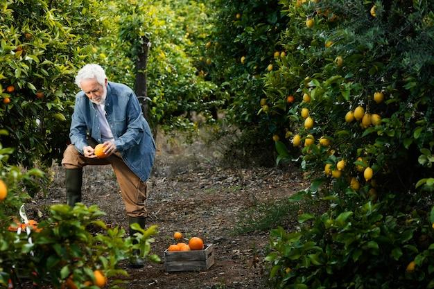 Senior homme debout à côté de ses orangers