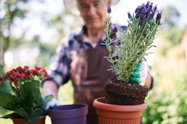 Senior homme travaillant dans le domaine avec des fleurs