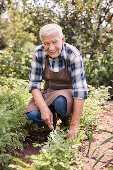 Senior homme travaillant dans le domaine avec des plantes