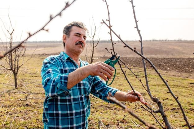 Senior man couper une branche avec des ciseaux d'élagage au printemps.