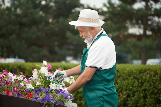 Senior travailleur masculin couper une fleur dans le jardin.