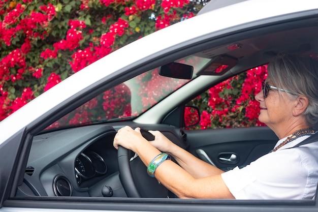 Senior woman voyage en voiture à côté d'une grande haie fleurie pleine de fleurs rouges