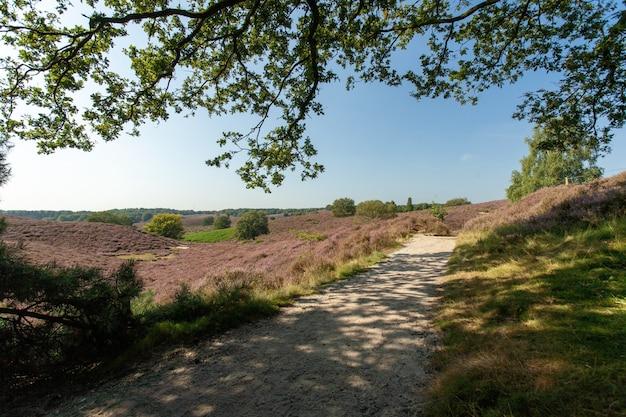 Sentier au milieu des collines sous un ciel bleu