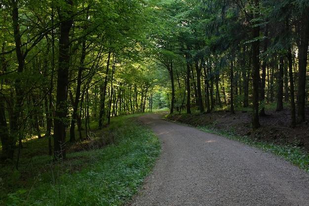 Sentier au milieu d'une forêt avec des arbres verts dans l'eifel, allemagne