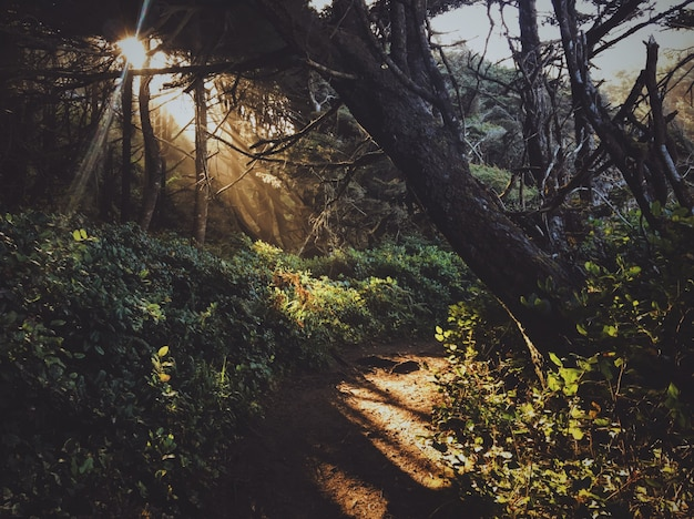 Sentier au milieu de la forêt avec le soleil qui brille à travers les arbres