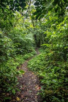 Sentier au milieu de la forêt verte
