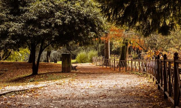 Sentier d'automne dans la forêt
