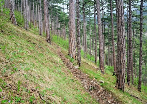 Sentier de bois dans la forêt d'été de pins sur la colline