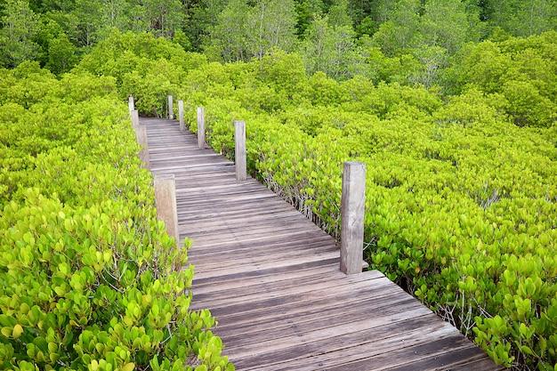 Sentier en bois dans la forêt de mangrove ou de mangrove indienne de la province de rayong, d'un vert éclatant