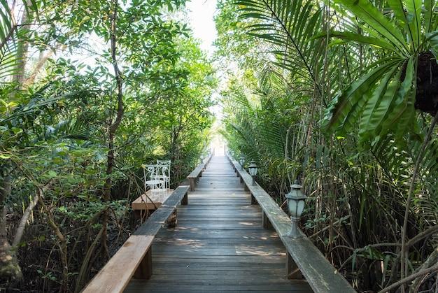 Sentier en bois directement dans le jardin d'ombre tropical