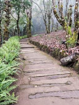 Sentier de bois le long de la colline.