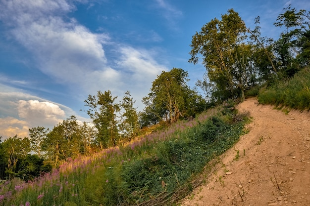 Sentier sur une colline couverte de fleurs et d'arbres sous la lumière du soleil et un ciel bleu