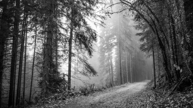 Sentier dans un bois brumeux bw