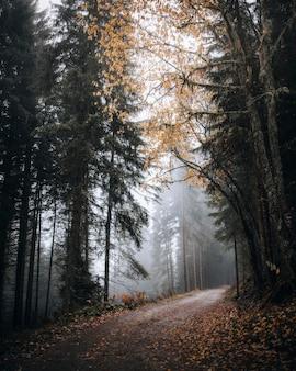 Sentier dans un bois brumeux