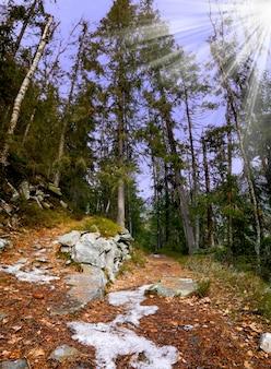 Sentier dans les bois de montagne en automne