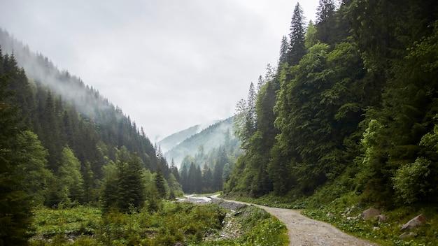 Un sentier dans la forêt brumeuse