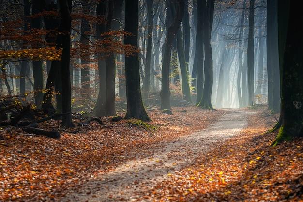 Sentier dans une forêt couverte d'arbres et de feuilles sous la lumière du soleil en automne